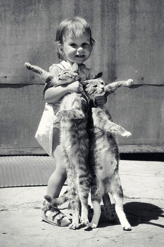 yesiamarayoffuckingsunshine:  I generally don't reblog anything with kids BUT who the fuck took this picture while these poor murderous tumblr cats were being strangled to death for what you consider an adorable picture of your kid? Insert commas where you want.