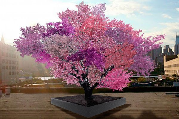 Aken's Tree of 40 Fruit looks like a normal tree for most of the year, but in spring it reveals a stunning patchwork of pink, white, red and purple blossoms, which turn into an array of plums, peaches, apricots, nectarines, cherries and almonds during the summer months, all of which are rare and unique varieties.