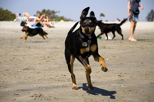 Coronado Dog Beach, CA