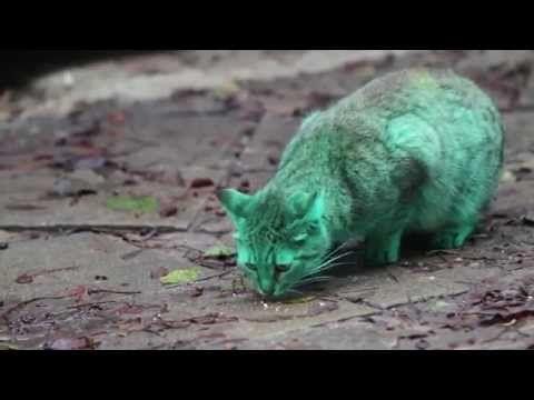Зелената котка на Варна достигна един милион гледания в Youtube (Всички видео клипове)