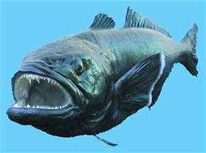 Patagonian Tooth Fish - Chilean Sea Bass - Bing Images
