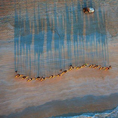 Looking Down on Camels walking along Cable Beach, Broome Western Australia. Cool photo!