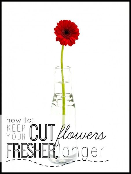 How to Keep Your Cut Flowers Fresher, Longer | Tipsaholic.com #floral #indoor #arrangement #gardening