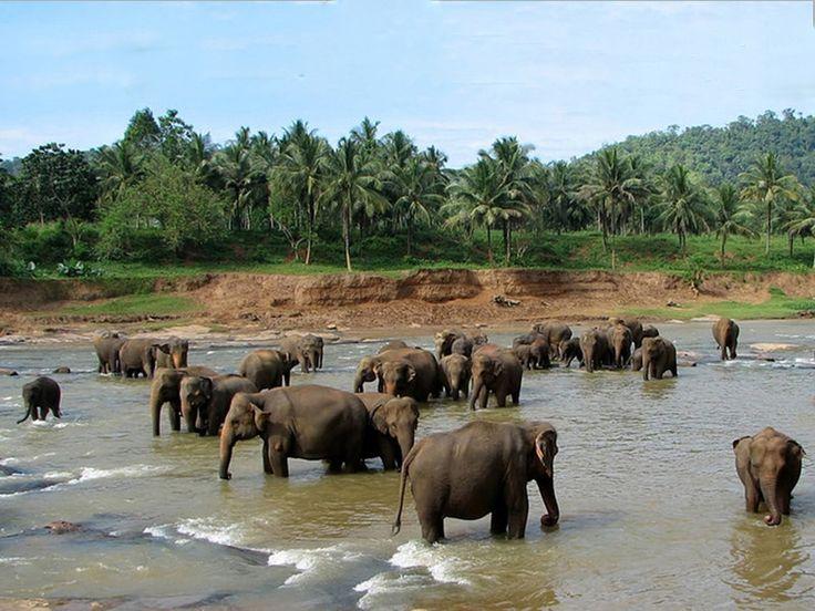 Belghar Sanctuary - in Belghar, Odisha, India