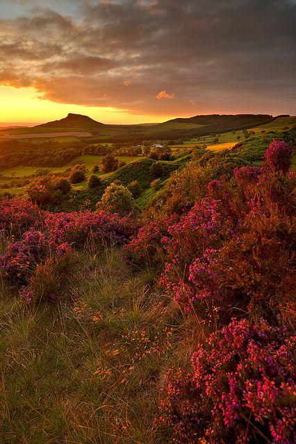 North Yorkshire Moors, England.