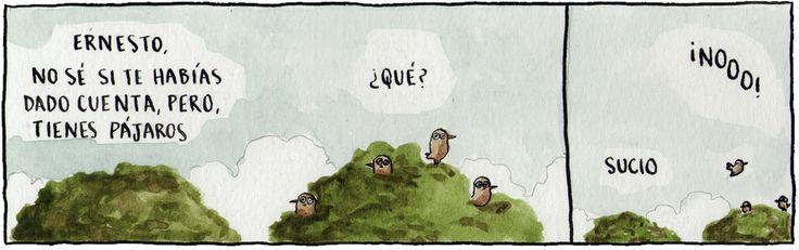 Shumeikers - Pájaros
