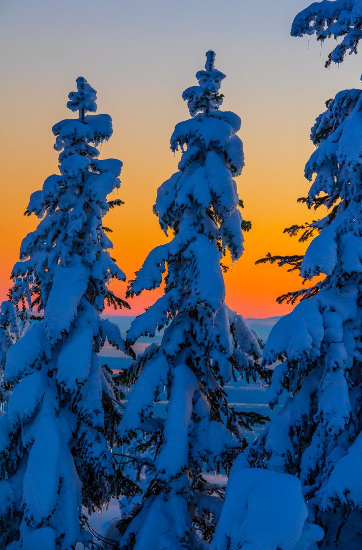 grouse mountain sunset trees in winter - there is a reason this is sea to sky country. A beautiful day at sea level in a few miles up translates into winter in the trees as seen here at Grouse Mountain.