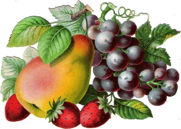 Oblaten Glanzbild scrap die cut chromo Obst 16,7 cm fruit Frucht berry Erdbeeren