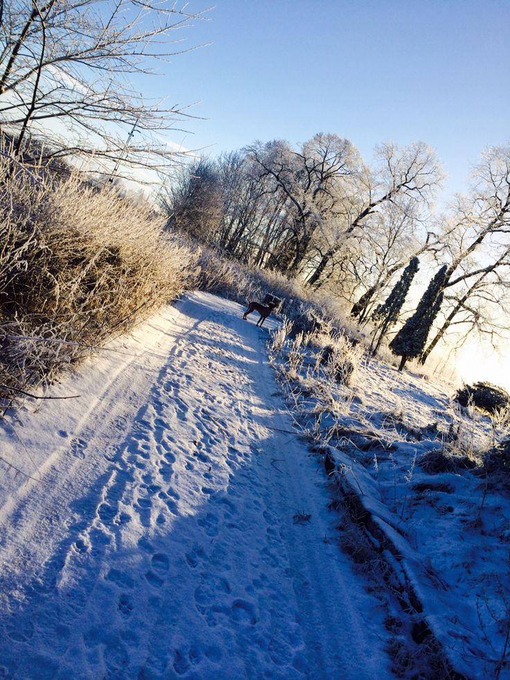 Winter at Hynboholm
