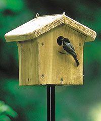Wild Birds Unlimited | Bird Food, Bird Seed, Bird Feeder, Birdhouse, Bird Bath, hummingbirds