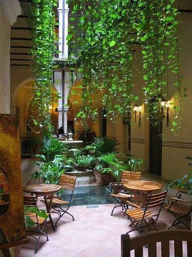 Planta Colgante Jardins De Casas, Ptio Interior, Paisagismo