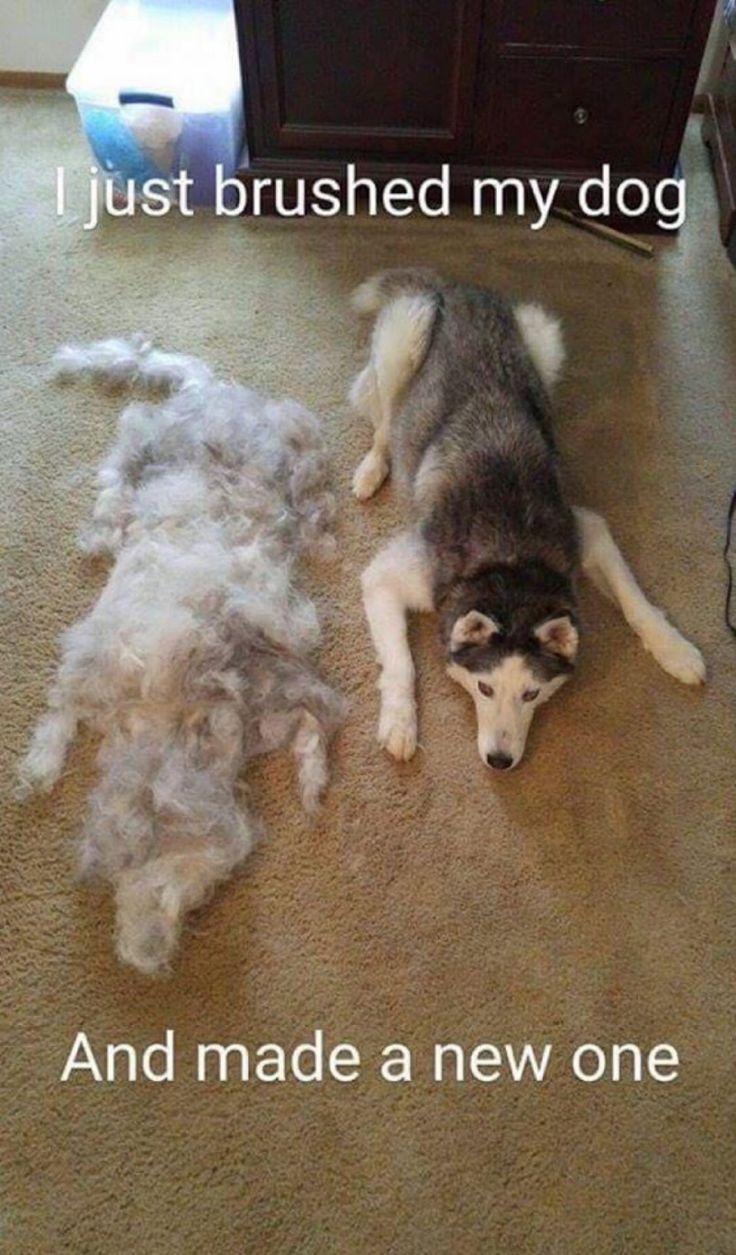25 images qui résument très bien les soucis que l'on rencontre lorsqu'on est propriétaire d'un animal poilu