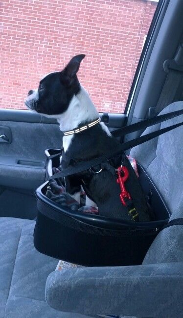 Diy Dog Booster Seat From Dish Pan Things I Made