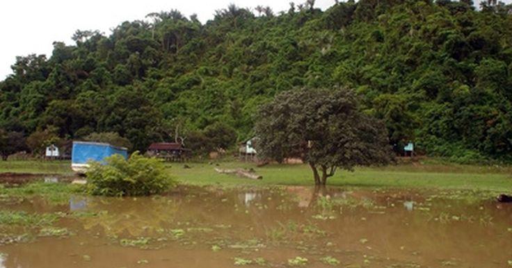 Peces del Amazonas. Localizado en el continente suramericano y considerado uno de los ríos más largos del mundo, el río Amazonas contiene a miles de especies diferentes de peces, incluyendo al bagre, el róbalo, la piraña y el candirú. En ciertas épocas del año, el río Amazonas se extiende a más de 120 millas (193 km) de ancho e inunda a las áreas cercanas a él.