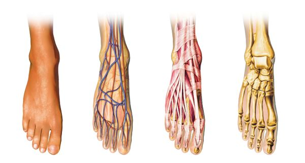 People from all ages can experience circulation problems, and although poor circulation affects the entire blood flow, it usually first manifests in the extremities. In most cases, poor circulation comes as a result of weakened blood vessels and too much...