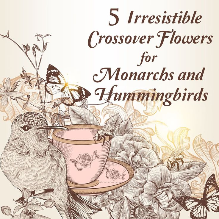 Attract both Monarch Butterflies and Hummingbirds with these Nourishing Nectar Plants and Never Be Alone in your Flower Garden again.