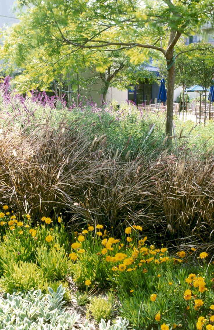 47 Best Drought Tolerant Landscaping Images On Pinterest 400 x 300