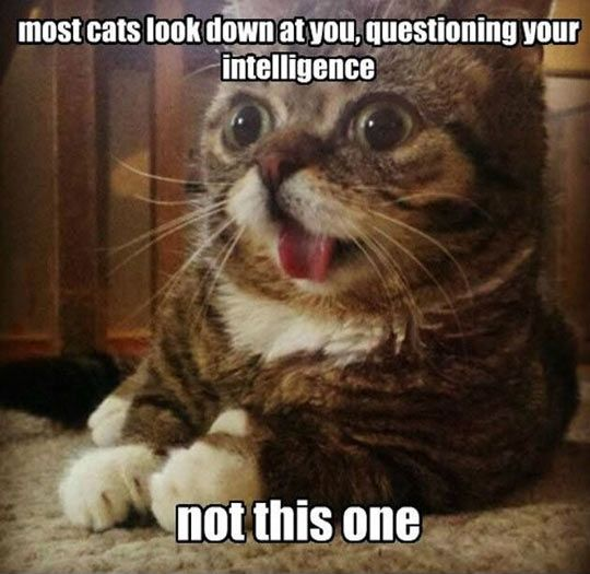 Most cats question your intelligence....