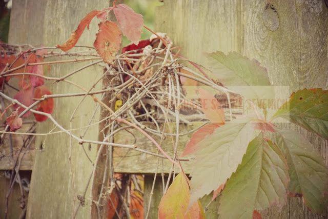 Vintagehauch MONE`S FOTOBLOG: Suche nach dem Herbst...