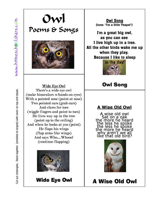 Free Owl Babies Lesson Plans And Lapbook Owls Lesson Plans Baby Owls Owls Lessons