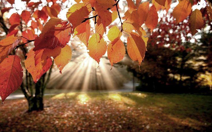 Google Afbeeldingen resultaat voor http://4.bp.blogspot.com/-4aFquxhyg2Y/UGIXDleZjFI/AAAAAAAAEDA/wP_V_IgyV0Y/s1600/hd-mooie-herfst-achtergrond-met-herfstbladeren-en-een-opkomende-zon-hd-herfst-wallpaper-foto.jpg