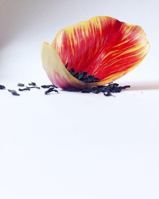 Le bonheur tient souvent dans les petites choses 😊 Bonne journée à tous ! #UnBonheurSimple #thénoir #blacktea #pentecote #férié #tulipe #pétale #fleur #théenvrac #teamtea #tealovers #instatea #thedesmuses #strasbourg #alsace #france #hoplagram