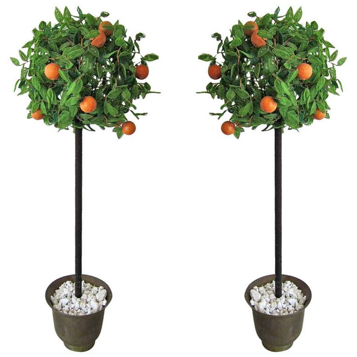 Paar Vintage italienischen Perlen Orangenbaum Topiaries   – Home Accessories and Furniture