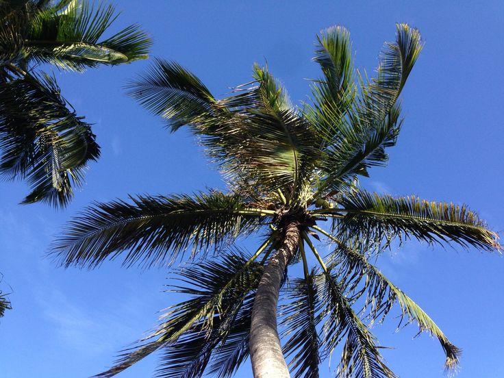 Zanzibar Trees, Coconut Tree #Tanzania, Best Beach Holiday Vacation.