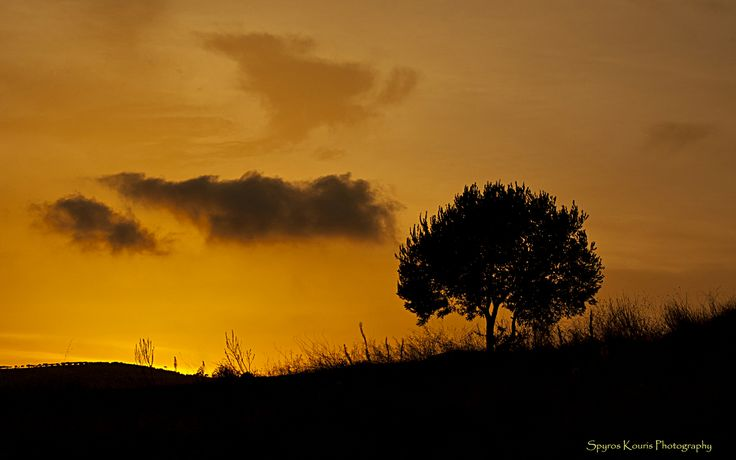 Landscape-Photography-Greece-Athens-Tree-Silhouette