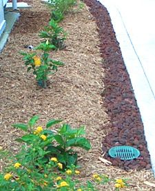 French Drains: a trench filled with rocks, gravel, sand to absorb and direct water away. This drain runs along the driveway, around the corner along the back flower bed and sidewalk where it accepts direct flow from two downspouts, heads under the lawn out to the woods to a rain garden.