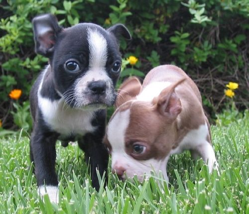 I want the brown one sooo bad!! No joke this will be my house warming gift to myself one day.