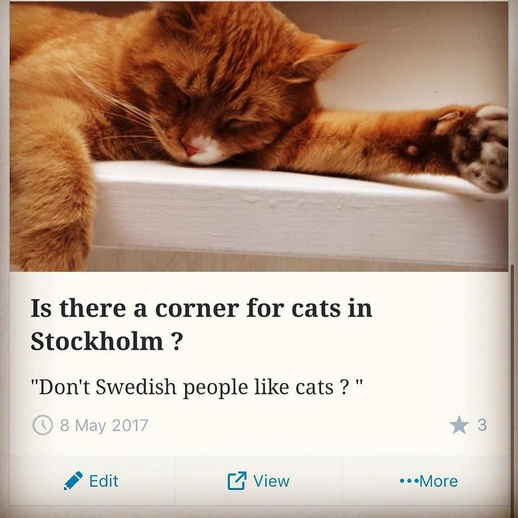 Clink the link in our profile to read our first blog (English & Swedish). The Swedes love of cats and is there a place for them in downtown Stockholm. #cats #catsofinstagram #catsofinstagram #catstagram #cat #stockholm #sweden ## ##katt