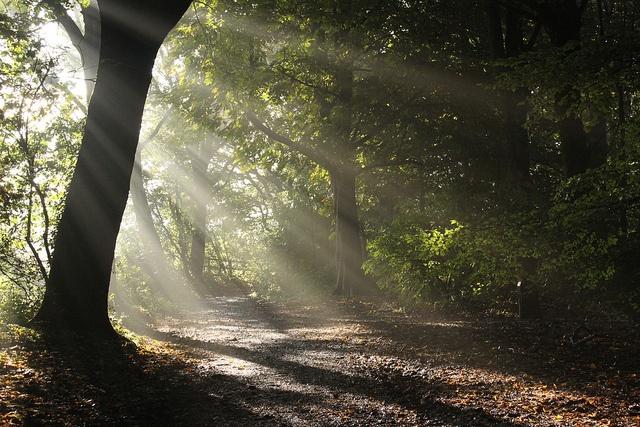 Worsley Woods ~ David Fox047 @ flickr