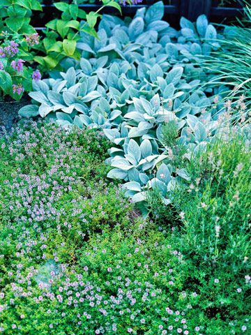 Easy-to-Grow Herbs