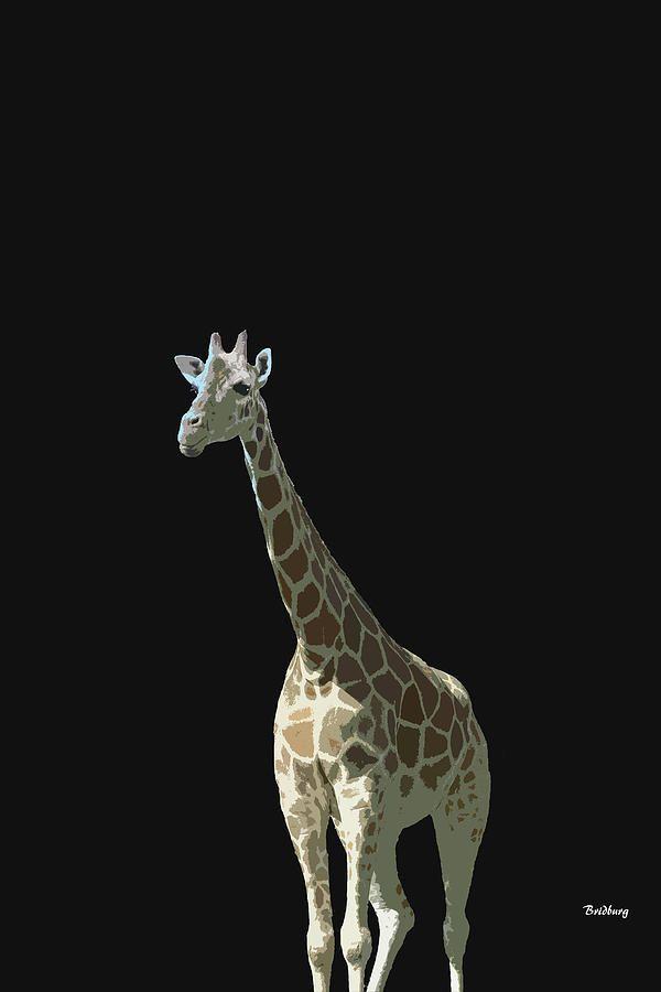 Sale 10 - 25% OFF Use promo code RYCUBL Good on all Prints See details....,david bridburg,music notes 32,kareem,giraffe,giraffa,african even-toed ungulate mammal,tallest living terrestrial animals,largest ruminants,giraffa camelopardalis,southern giraffe,giraffa tippelskirchi,masai giraffa,giraffa reticulata,reticulated giraffa,giraffa camelopardalis,northern giraffe,horn-like ossicones,giraffidae,savannahs inhabitant,animalia,chordata,synapsida,mammalia,artiodactyla