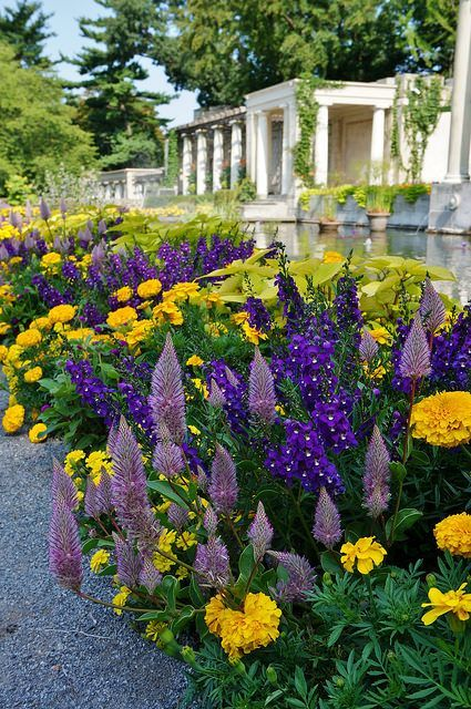 ptilotus joey flowers | Ptilotus exaltatus 'Joey', Angelonia, Tagetes | Flickr - Photo Sharing ...