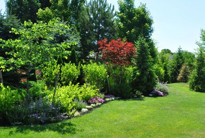 Pictures Shrubs for Landscaping Designs Ideas Easy Plans