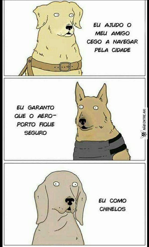 cães!
