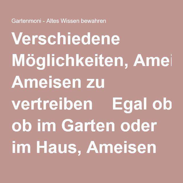 Более 20 лучших идей на тему «Ameisen im garten» на Pinterest - was tun gegen ameisen in der küche