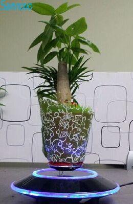 Air bonsai is a good birthday gift.