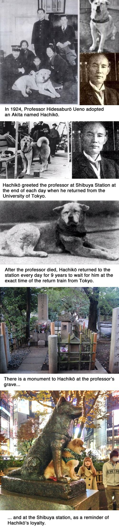 Hachiko: The dog who waited for his owner at the train station: | 14 Pictures That Prove Animals Are Better Than People