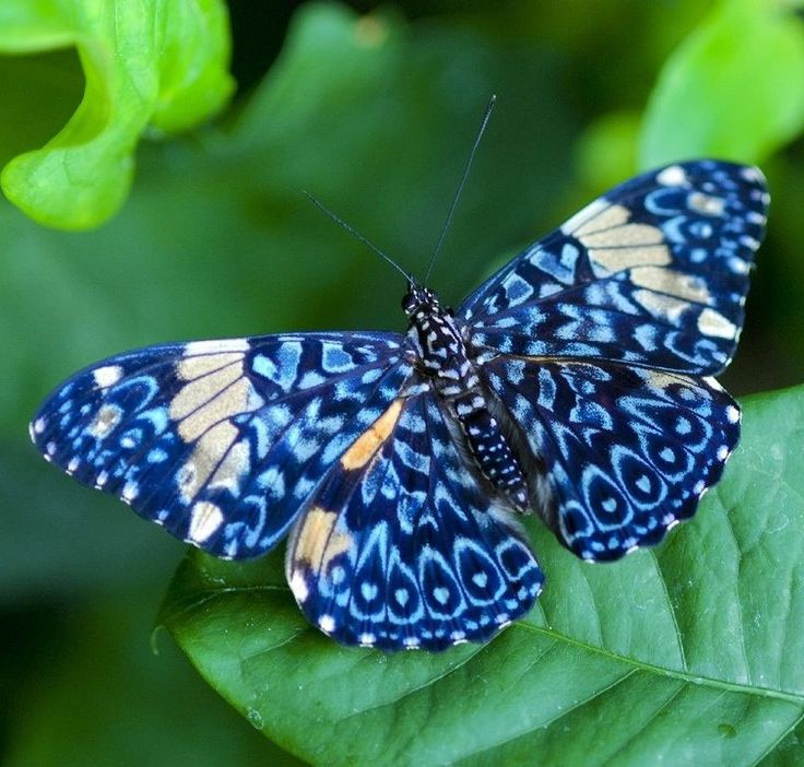 The most beautiful butterflies in the world There are many beautiful species of butterflies in the world, of which I leave here a collection made by me, I hope you like it. Posted by Satpa :GFORUM