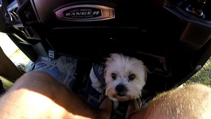 Puppy Uber Service https://www.youtube.com/watch?v=ArpFiOF-aMA