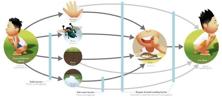 La gastro-entérite est une infection du tube digestif très fréquente, le principal symptôme: la diarrhée, constitue un symptôme qui ramène quelque 3 millions de France à consulter chaque année. La…