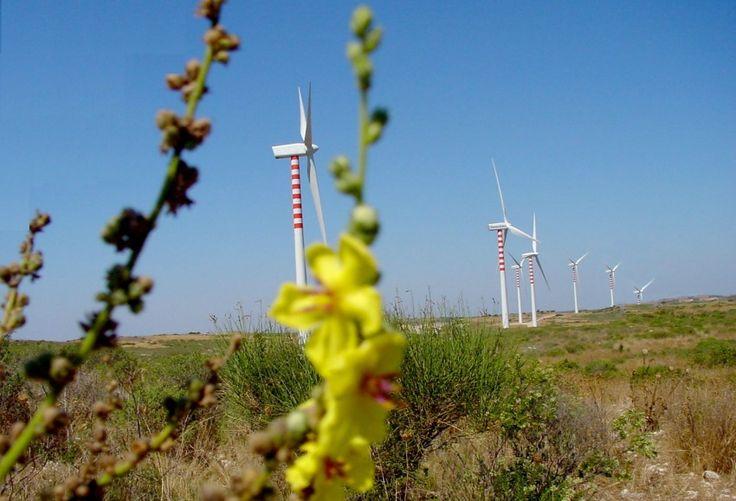 Il paese piu ecosostenibile della Sardegna e dove si risparmia di più. Si chiama Florinas (SS) ed è un piccolo paese di 1500abitanti, dove tutte le strutture pubbliche sono dotate di pannelli solari, le strade illuminate a led e dove non si paga l'Irpef! Orgoglio degli abitanti, un mini parco eolico nella periferia del paese, bene integrato per non deturpare il paesaggio.