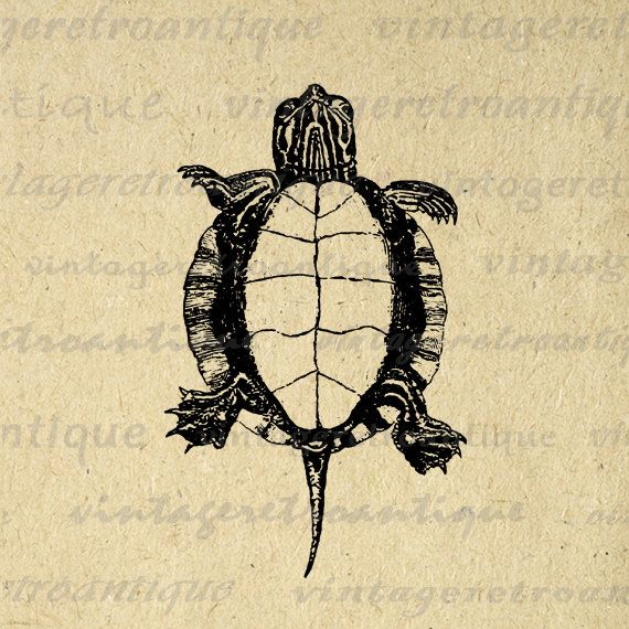 Printable Digital Tortoise Turtle Graphic Illustration Download Image Vintage Clip Art. Printable high resolution digital graphic for making prints, transfers, t-shirts, tea towels, and much more. For personal or commercial use. This digital image is high quality at 8½ x 11 inches large. Transparent background version included with every digital image.