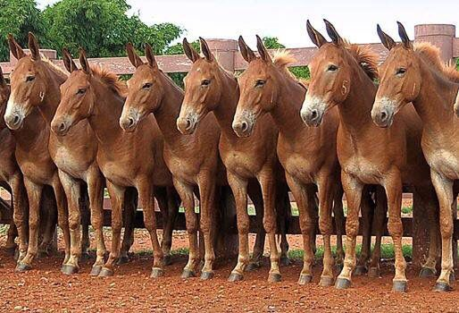 You can see the subtle differences between them all! Which ones are more horse than donkey and which ones are more donkey than horse! Love it!!