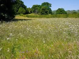 17 Best Images About Wild Flower Meadows On Pinterest