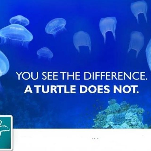 Recycle plastic bags, don't let them end up in the sea. Turtles think they are jellyfish and eat them.