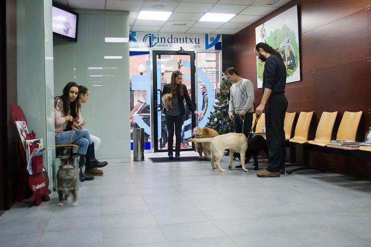 Resultado de imagen para sillas para sala de espera veterinaria muebles cotz vet pinterest - Clinica veterinaria silla ...